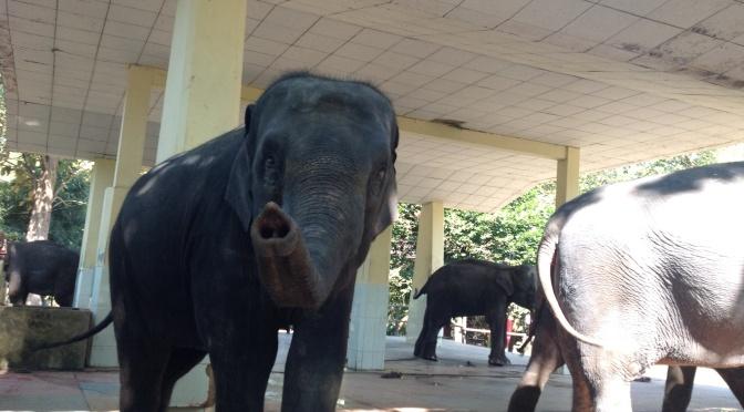 Zootime in Yangon – Myanmar